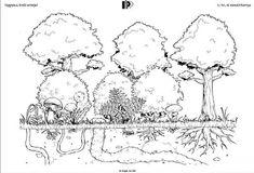 Játékos tanulás és kreativitás: Az erdő szintjei flipbook Science Activities For Kids, Nature Study, Diorama, Montessori, Coloring Pages, Geek Stuff, Map, Teaching, School