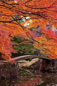 Japanese Garden #japan / Japanese Culture