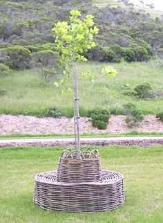 08-Willow Tree chair