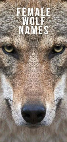 Female Wolf Names – The Ultimate List for a Strong and Beautiful Canine Husky Names Female, Female Names List, Female Fantasy Names, Puppies Names Female, Fantasy Wolf, Puppy Names, Pet Names, Strong Dog Names, Tough Dog Names