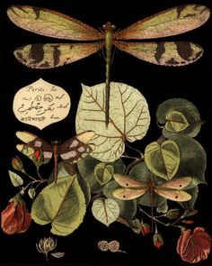 Dragonfly print <3 botanical art. Wish people would credit artists (or correct sources) when they pin...