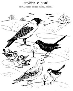 Feeding Birds In Winter, Winter Activities For Kids, Nature Journal, Whimsical Art, Coloring Pages For Kids, Bird Feeders, Kindergarten, Drawings, Painting
