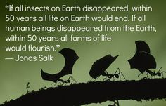 """""""IF ALL INSECTS ON EARTH DISAPPEARED, WITHIN 50 YEARS ALL LIFE ON EARTH WOULD END.  IF ALL HUMAN BEINGS DISAPPEARED FROM THE EARTH, WITHIN 50 YEARS ALL FORMS OF LIFE WOULD FLOURISH.""""  Jonas Salk.........well isn't this interesting!"""
