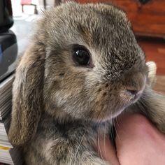 "996 mentions J'aime, 7 commentaires - Rabbit_world (@cute_rabbit_world) sur Instagram : ""Aww Photo by: ilconiglionano"""