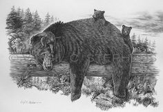 Naptime Yet?, bear and cubs pencil drawing by western Artist Virgil C. Stephens