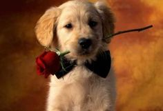 14 Dogs That Will Totally Melt Your Heart On Valentine's Day