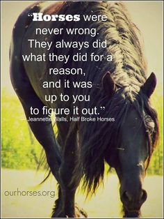 Horses are never wrong. They always do what they do for a reason, and it is up to us to figure it out.