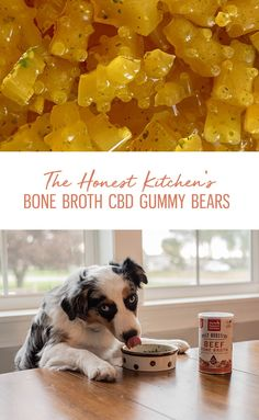Looking for another way to incorporate CBD into your pup's diet? These Canna-Pet infused bone broth gummy bears should do the trick! Using our Instant Beef Bone Broth, your dog can now enjoy CBD in a brand new way. Cbd Dog Treats Recipe, Diy Dog Treats, Homemade Dog Treats, Dog Treat Recipes, Healthy Dog Treats, Dog Food Recipes, Beef Bone Broth, Beef Bones, Dog Cookies