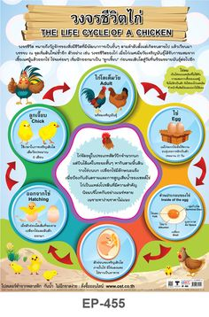 za nurisa's media content and analytics Iq Kids, Thailand Language, Fathers Day Images, Learn Thai, Animal Agriculture, Powerpoint Background Design, Powerpoint Template Free, Circle Of Life, Science Lessons