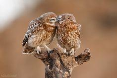 Photo Romance in Nature by Ilia Shalamaev on 500px