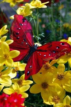 Lovely red butterfly on yellow flowers #butterfly #getinsync #flowers