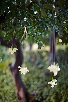 hang roses from the tree. Simple/lovely idea.
