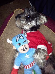 Puppie min schnauzer sleeping wih captain America