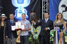 Arabian Horse - Titan AS - Las Vegas