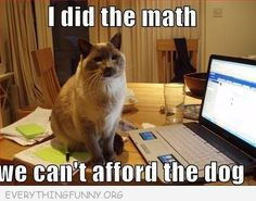 Funny Animal Pictures, cat memes, Just like cat, funniest animals Cat Jokes, Funny Animal Memes, Funny Animals, Cute Animals, Funny Humor, Math Humor, Funniest Animals, Pet Memes, Animal Humor