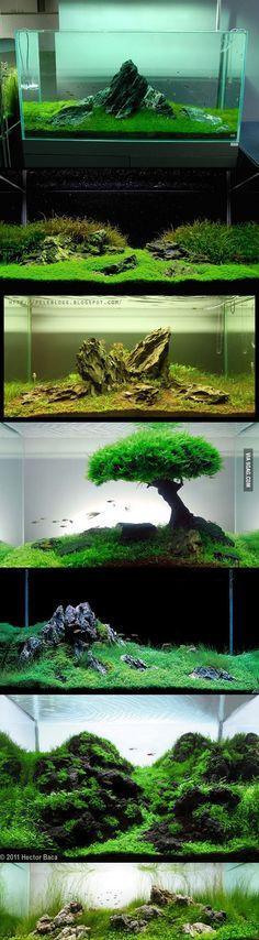 Minimalist Iwagumi method aquariums
