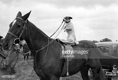 Photo : Animals. pic: circa 1930's. A Jack Russell Terrier takes the reins of a horse at a North of England horse show.  | Achat sur gettyimages.fr |