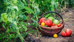 5 Steps To Healthier Garden Soil http://www.hobbyfarms.com/5-steps-healthier-garden-soil/