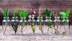 10 Hierbas aromatizantes que puedes cultivar en agua todo el año – 10 Ideas