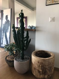 Plants, Plant, Planets