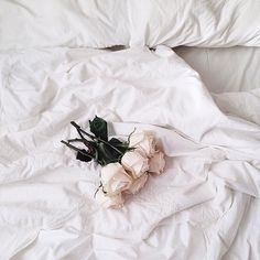 white, rose, and flowers image Aesthetic Colors, Aesthetic Pictures, Aesthetic Outfit, Aesthetic Vintage, Images Esthétiques, Black And White Aesthetic, White Wallpaper, Picture Wall, Wall Collage