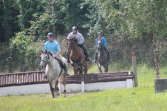 Cindy hadnt jumped in 12 years! Looks like she's still got it! Cross Country Jumps, How To Gain Confidence, Horses For Sale, Horse Riding, Animals, Animaux, Animal, Animales, Horseback Riding