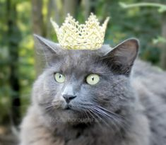 Royal Cat Crown Dog Crown The White Queen by ToScarboroughFair