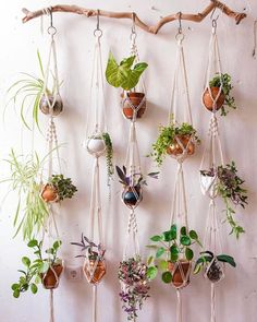 """@mindbodygreen on Instagram: """"Welcome to Houseplant Hanging 101. 🌿 A comprehensive guide from @greeneryunlimited on which plants are best to hang in our home, how to…"""""""