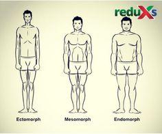Telesné typy (somatotypy)
