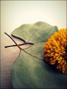 Still Life Flower and Eucalyptus by Rachel Duke Photography