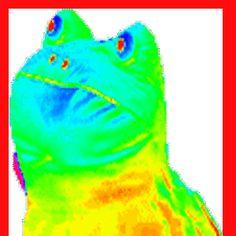 MLG Frog - Wiki Memes Pedia - Wikia