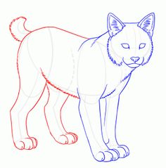 how to draw bobcats, bobcat step 10