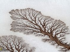 The river system looks like a fractal tree which gives me an idea of making the road in the map just like this(look like a tree) as tree symbolizes ancestry.