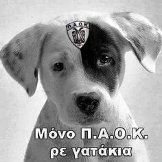 Thessaloniki, Labrador Retriever, Dogs, Animals, Quotes, Sports, Labrador Retrievers, Quotations, Hs Sports