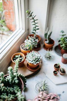 Visiting Marion Rekersdrees - Plants are friends - Cactus Cacti And Succulents, Planting Succulents, Potted Plants, Indoor Plants, Planting Flowers, Indoor Cactus, Flowering Plants, Shade Plants, Hanging Plants