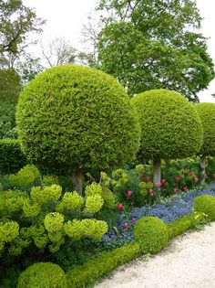 garden privacy hedge ideas spheres boxwood tulips flower beds