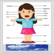 Parts Of The Body Girl Digitally Printed Photo Roller Blind
