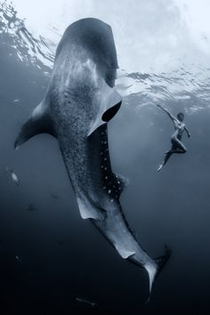 """Dancing with a whaleshark"" by Shawn Heinrichs."