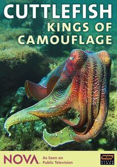 Cuttlefish: Kings of Camouflage: Nova movie   Homepage › Documentary › Nova: Cuttlefish - Kings of Camouflage »