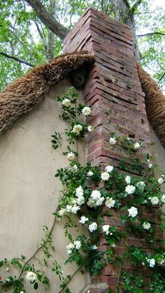 beautiful climbing roses: my love for green & white in the landscaping
