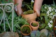 Advice, plant lists and other inspirational ideas for fairy gardens