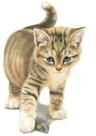 Afbeeldingsresultaat voor francien katten servies