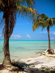 Really want to visit the Mexican coast - bliss and paradise, pall trees, just what I need right now, Cancun