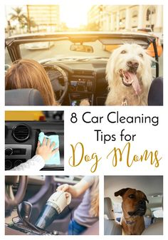 DIY decorating Cleaning tips with dogs, grill Cleaning tips, Cleaning tips dishwasher, ec. - How To Clean Clams? Car Cleaning Hacks, Deep Cleaning Tips, Car Hacks, Green Cleaning, House Cleaning Tips, Natural Cleaning Products, How To Clean Clams, Clean Grill, Dog Food Brands