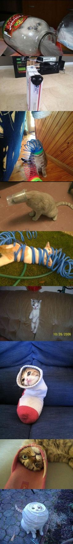 Let's just take a moment - Fail Pictures | Webfail - Fail Pictures and Fail Videos.  Cat