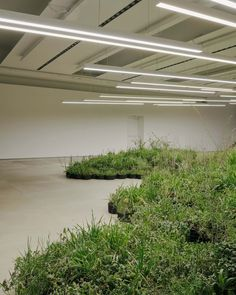 Linda Tegg has created a living installation at Jil Sander's headquarters in Milan, Adjacent Fields, using plants gathered from around the city. Jil Sander, Prefab Cabins, Wild Grass, Milan Design, Catwalk Design, Australian Artists, Dezeen, Paris Hilton, Landscape Architecture