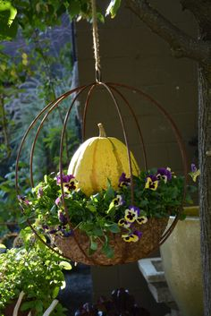 Pumpkin in a hanging container with pansies.