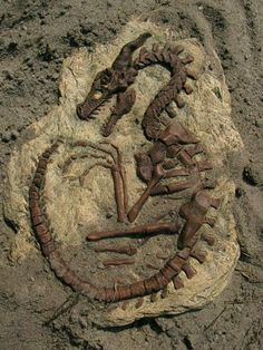How to make your own Dragon Fossils