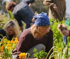 Permaculture is Revolution disguised as Organic Gardening