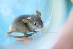 Pictures of mice Animals And Pets, Baby Animals, Felt Animals, Pocket Pet, Pet Vet, Pet Mice, Cute Rats, Cute Mouse, Cute Little Animals